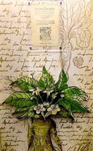 Bitkilerden Gelen Tedaviler Kitabı ve Kökleri İnsana Benzeyen İlginç Bitki : Adamotu