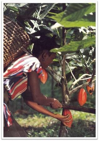 kakao toplama